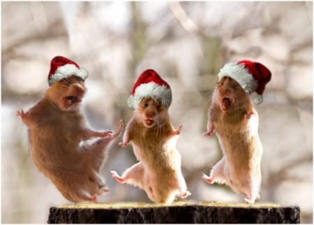 Приколы фотоприколы про новый год